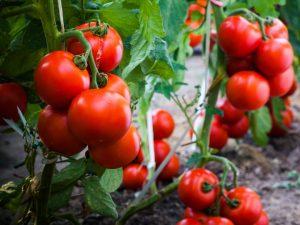 inflammation reducing food